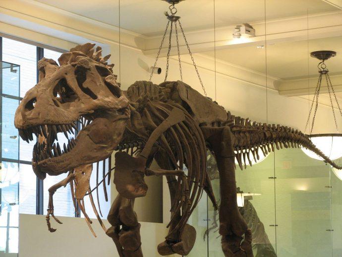 musei new york Museo di Storia Naturale