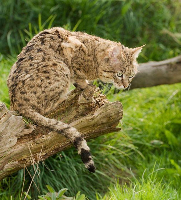 fauna-selvatica-in-cina-animali