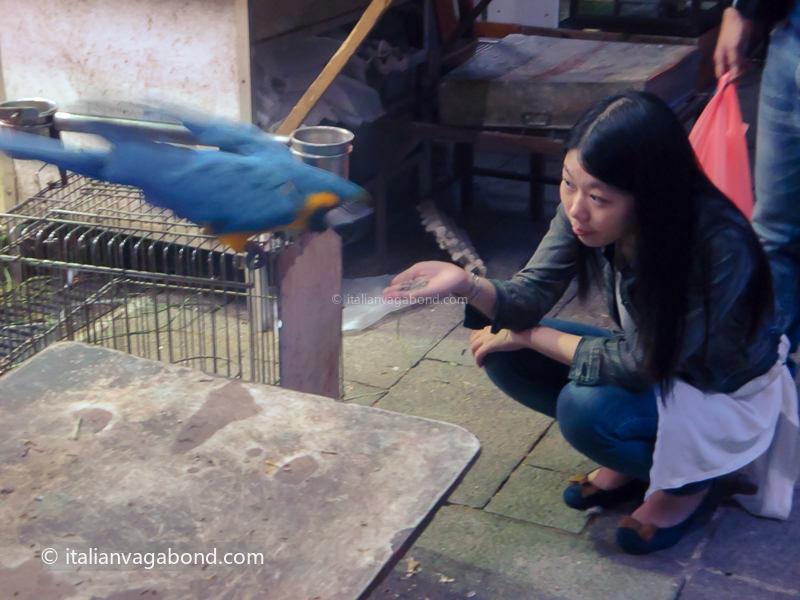 hong kong cosa vedere bird market