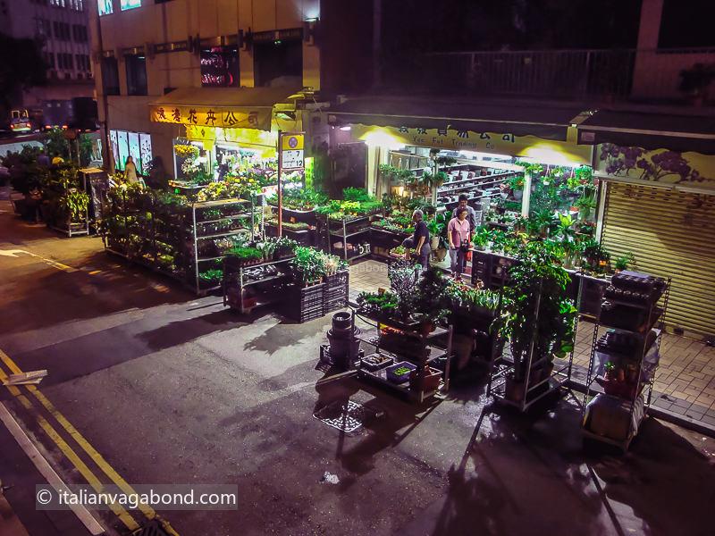 Hong Kong - Cosa Vedere: flower market